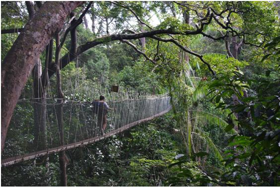 Taman Negara, Pahang