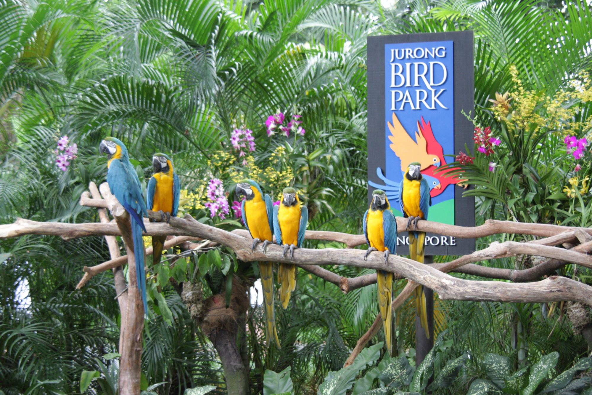 The Jurong Bird Park