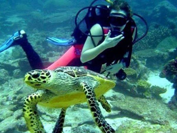 Diving at Fujairah
