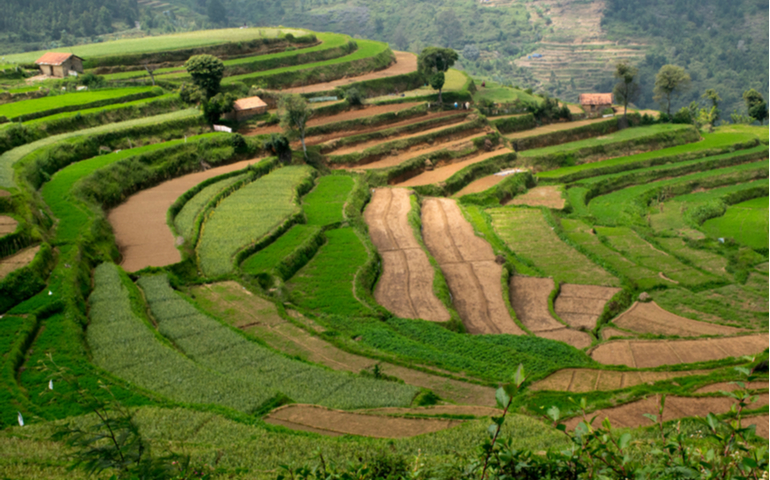 Contour farming in Kodaikanal