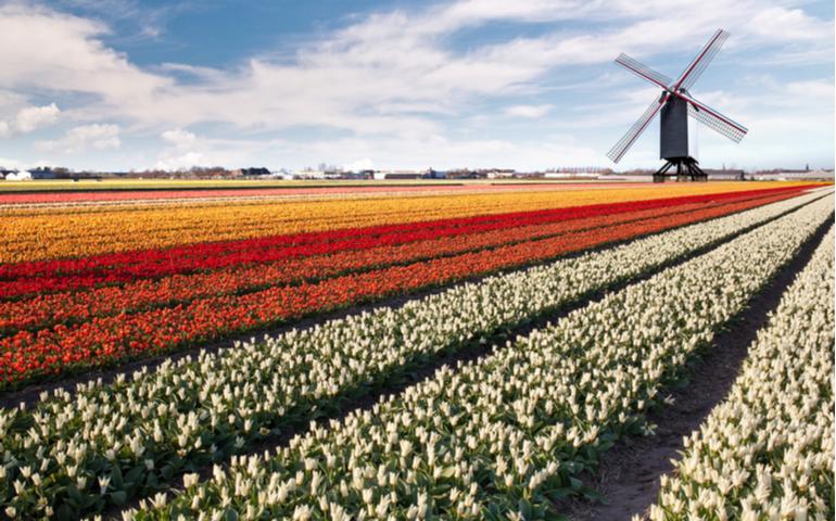 Tulip Garden of Amsterdam
